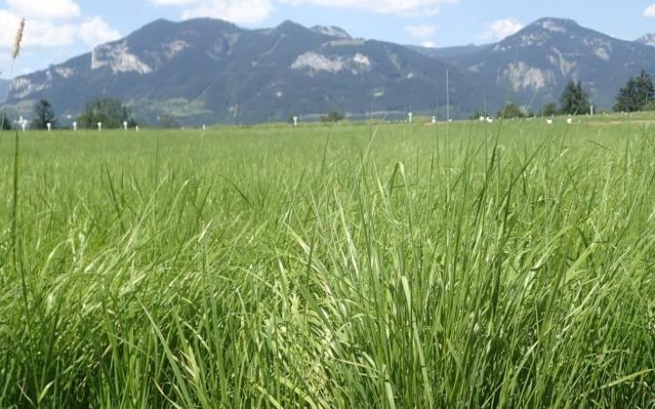 Vorsicht beim Kauf von Qualitätsmischungen für das Grünland!