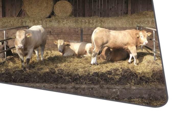 Neuerscheinung: Besonders tierfreundliche Haltung – Tipps für die Rindermast