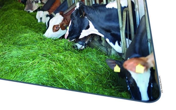 Neuerscheinung: Grünfütterung im Stall – worauf ist beim Eingrasen zu achten?