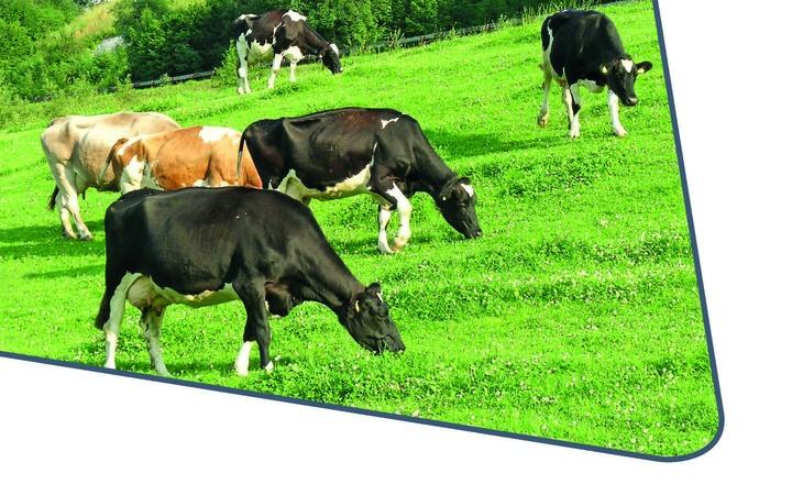 Neuerscheinung: Rinder effizient mit Eiweiß versorgen