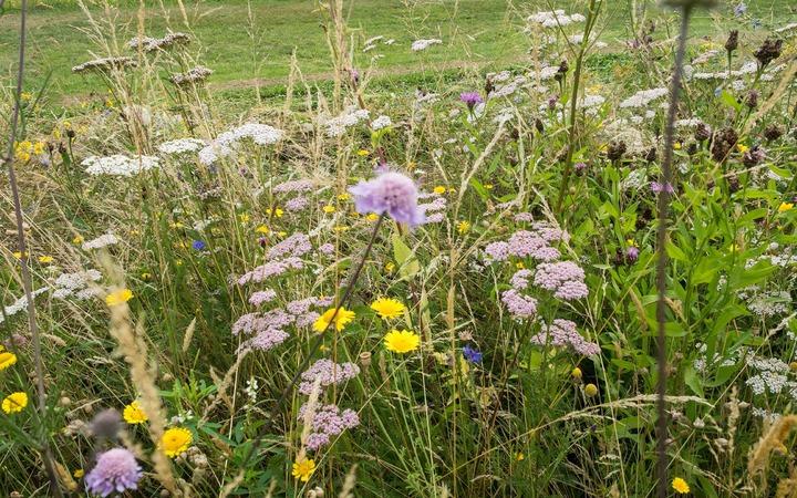Einladung zum Lehrgang Wildblumenwiese