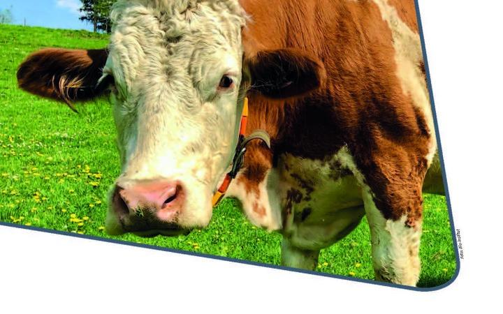 Neuerscheinung: Rinder mit anderen Augen sehen!
