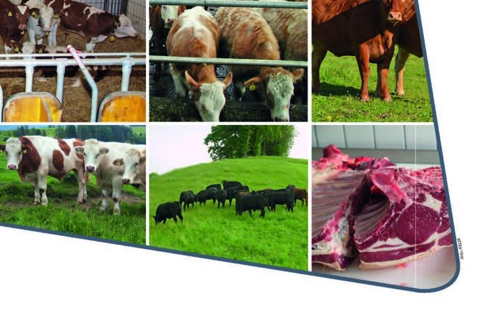 Neuerscheinung: Grünland- und weidebasierte Ochsen- und Kalbinnenmast
