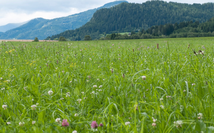 Neue App der AGFF: Wiesengräser leicht erkennen