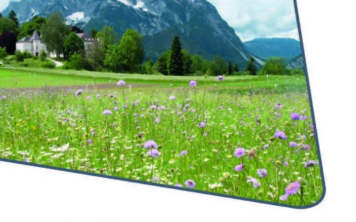 Neuerscheinung: Aufblühen Blühmischungen aus heimischen Wildpflanzen