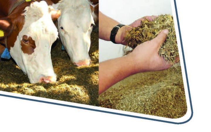 Neuerscheinung: Die Bedeutung der Gerüstsubstanzen für eine wiederkäuergerechte Fütterung