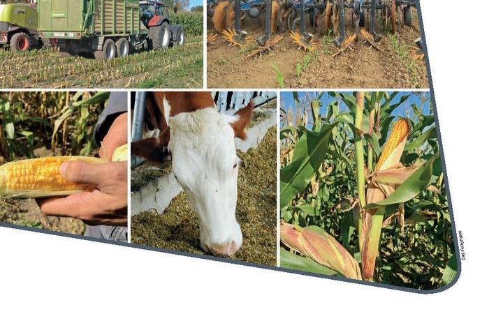 Neuerscheinung: Nachhaltiger Bio-Silomais Anbau – Empfehlungen zu Pflanzenbau, Ernte und Fütterung