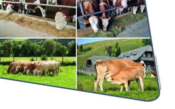 Neuerscheinung: Der richtige Einstieg in die Rindfleisch-Erzeugung
