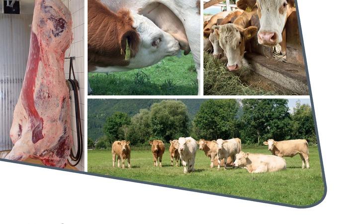 Neuerscheinung: Herdenmanagement in der Mutterkuhhaltung